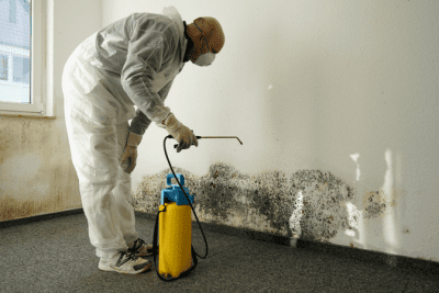 Cleaning After COVID-19, Cleaning Mold