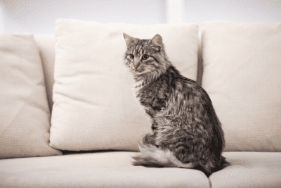 How to Create Your Own Images and Ads, Cat On Couch